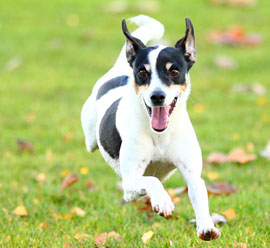 Your dogs nutrition